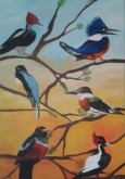 AVES -  - TODO COLOR